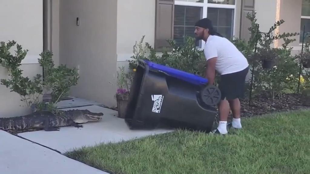 Мужчина спас соседей от аллигатора, поймав его в мусорный бак - TwitNow.ru